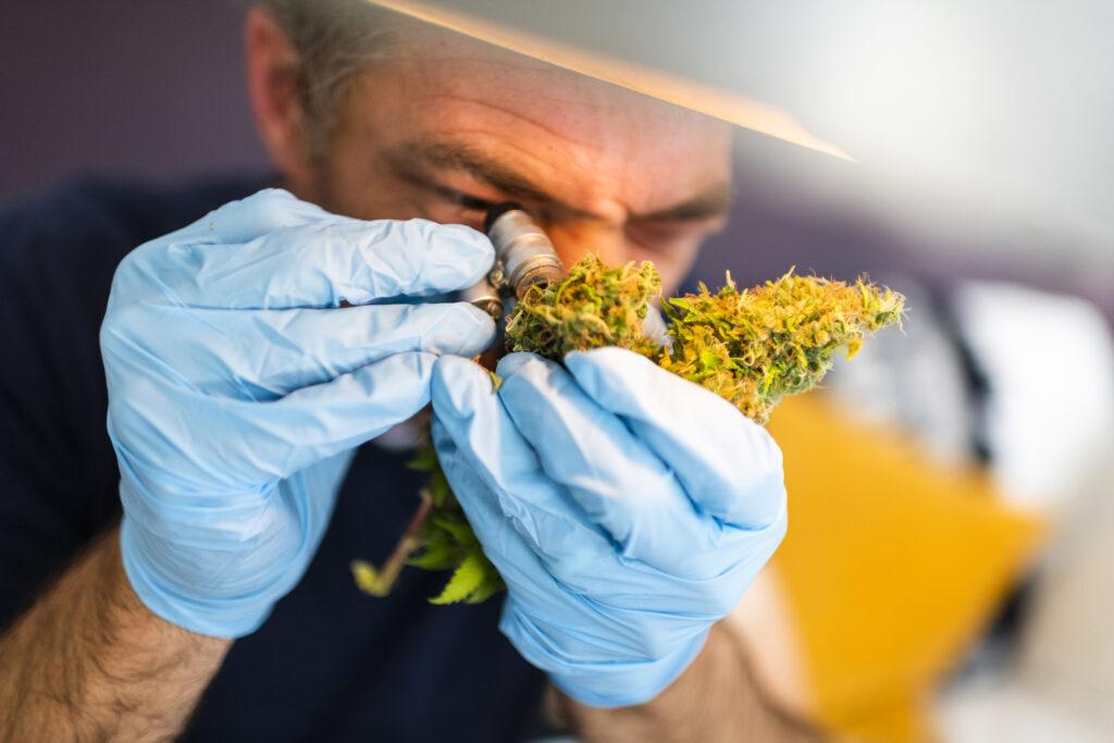 Cannabis Grow Room Inspector